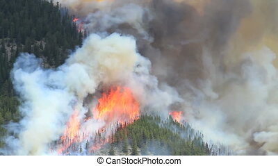 Forest fire flames 04 - Huge flames and smoke of a large...