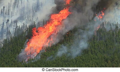 Forest fire flames 08 - Huge flames and smoke of a large...