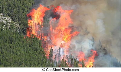 Forest fire flames 02 - Huge flames and smoke of a large...