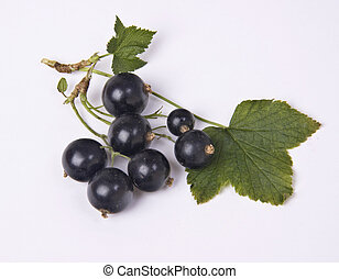 Blackcurrant taken in studio