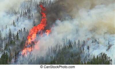 Forest Fire 07 - Huge flames and smoke from a large forest...