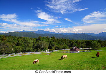 Horse and blue sky of plateau in japan