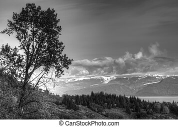Birch tree near the bay in black and white - Birch tree on a...