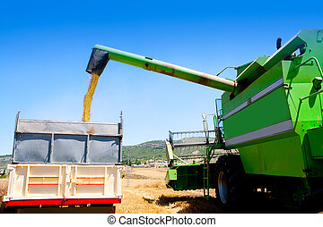 Combine harvester unloading wheat in truck
