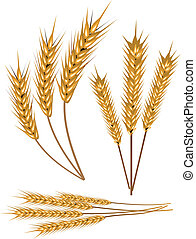 Wheat - Stock Vector Illustration: