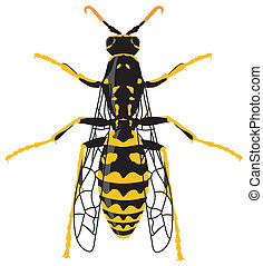 Wasp - Vector illustration of wasp over white background