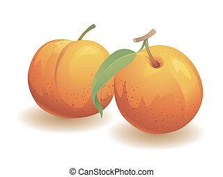 Peach Fruit - Realistic vector illustration of two peaches