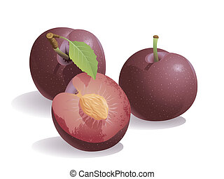 Plum Fruit - Realistic vector illustration of a plum or...