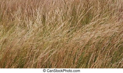 Wind in the prairie grass 01