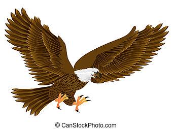 voando, águia, isolado, branca, fundo