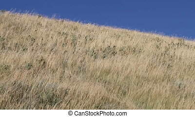 Wind in the prairie grass 05