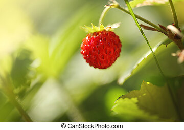 Wild strawberry Macro closeup