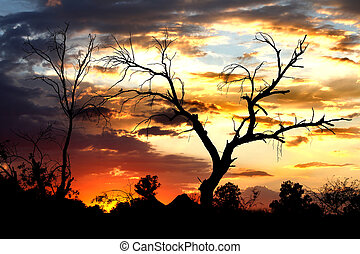 Desert Tree at Sunset - Brilliant Arizona Sunset near Tucson...