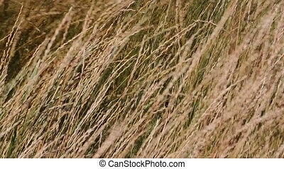 Wind in the prairie grass 02