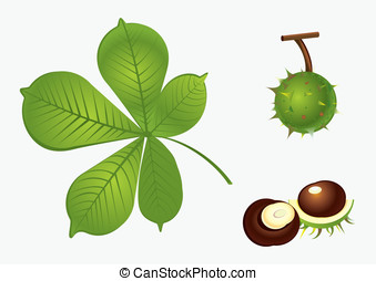 Chestnut set - Isolated chestnut leaf and fetus