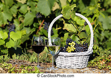 wine agriculture - glasses of wine and grappes in a field