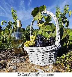 white wine square - glass and bottle of white wine and...
