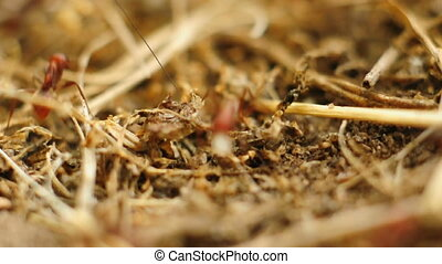 Ants traffic at the anthill