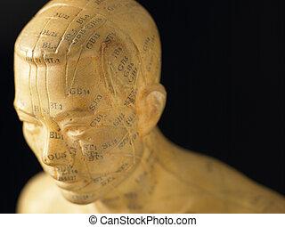 meridiano, líneas, en, un, acupuntura, estatuilla