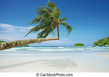 equator - View of nice tropical  beach  with some palms
