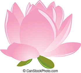 Illustration, sigle, rose, lotus(waterlily)