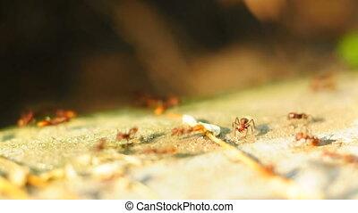 Ants travel on concrete