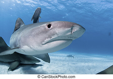 鯊魚, 驚奇