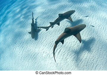 Shark shadow - Sharks swimming along the sea bed, Bahamas
