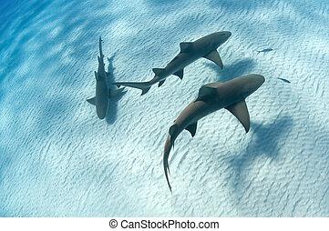 鯊魚, 陰影