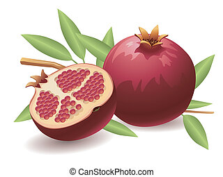 Pomegranate - Realistic vector illustration of a pomegranate...