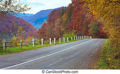 Autumn road in forest