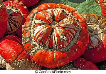 calabaza, turbante