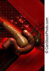 Pancreas - Digital illustration of pancreas in colour...