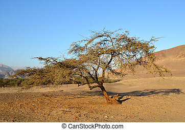 Lonely tree in the desert with mountains and clear blue sky...