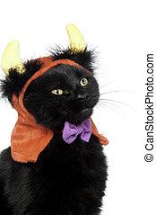 Black cat with devil horns - Black cat wearing devil horn at...