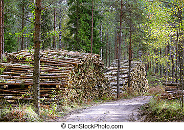 Logging Road - Stacks of wood fuel and birch logs by forest...