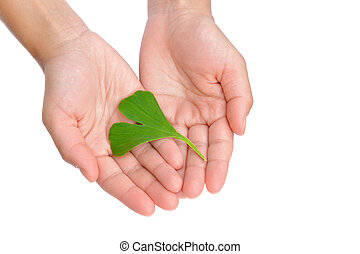 Hands of young woman holding ginkgo leaf