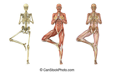 Yoga Tree Pose - Anatomical Overlays - A woman stands in a...