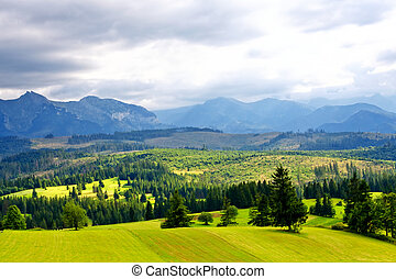 Green valley in the high mountains