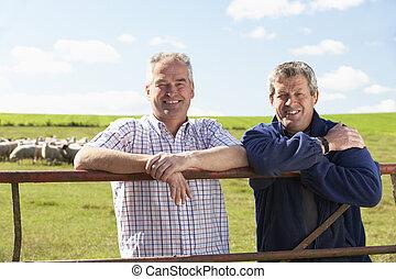 fazenda, trabalhador, com, rebanho, de, Sheep