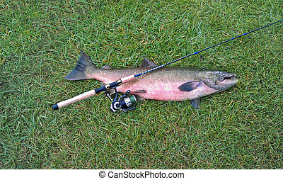 salmon with fishing pole - Salmon and fishing pole on the...