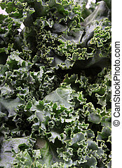 Fresh leafy kale - Close up of fresh green leafy kale