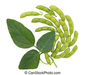 Soybean - Fresh soybean with pod and leaf