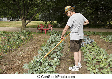 tending the garden - gardener tending and weeding plants in...