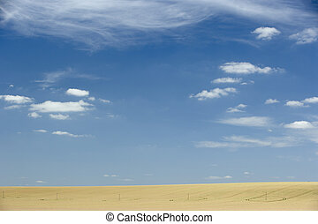 Dry Pasture Underneath A Blue Sky