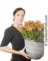 middle age woman gardener with  beautiful chrysanthemum mum flower plant in pot