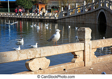Seagulls In Kunming - A seagull perched on a railing in a...