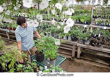 Man Shopping for Plants in Garden Center