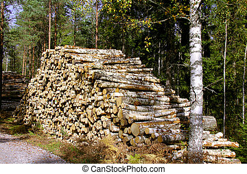 Pile of Birch Logs in Forest