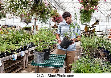 Man Shopping in Garden Center